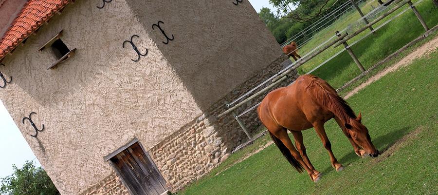 Ondine et Igor randonnee a cheval Loire