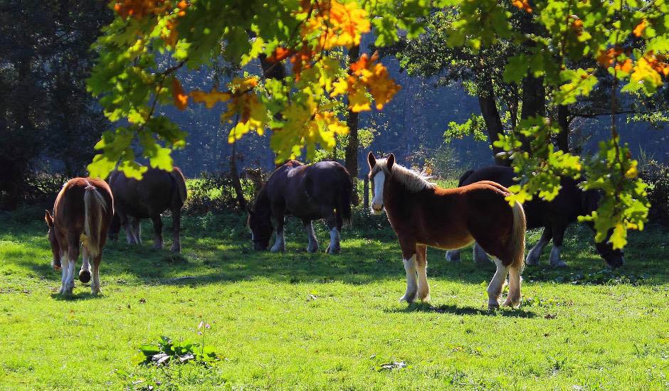A cheval dans l'Allier Equisioule