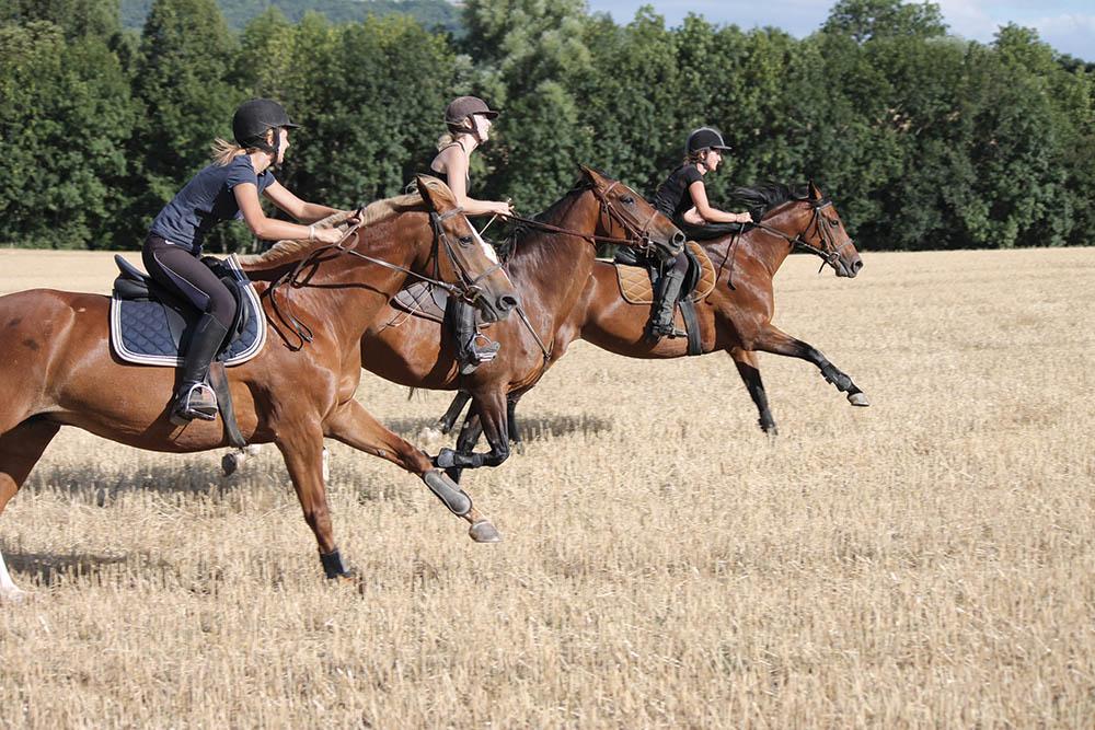 Balade à cheval Allier