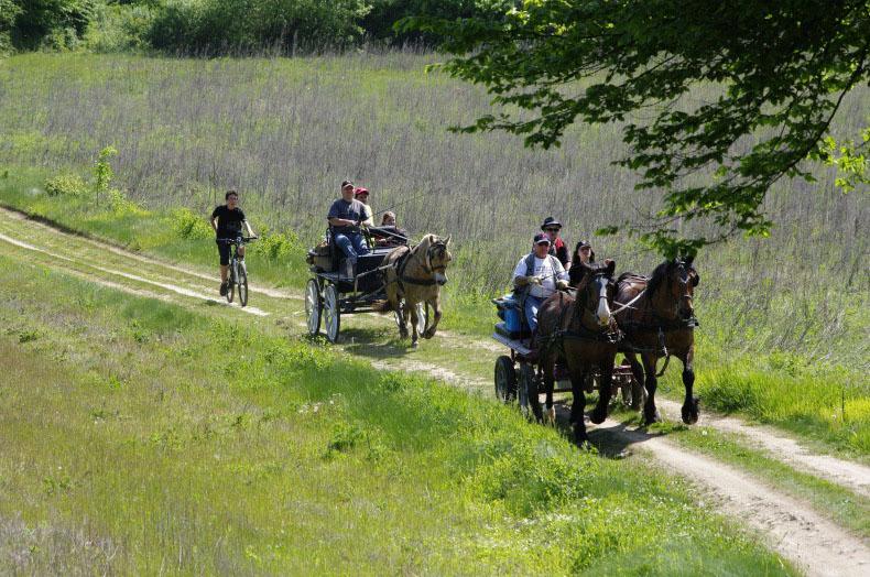 Caval en Dauphiné Attelage Isère