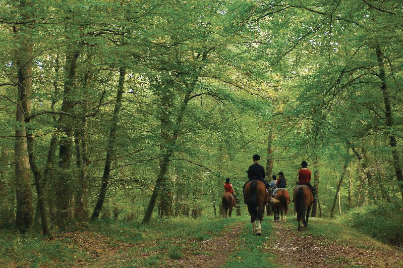 Equisioul cheval randonnée Allier