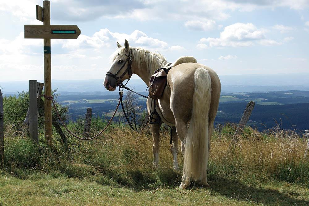Les Cornes d'Urfé Loire Balade à cheval
