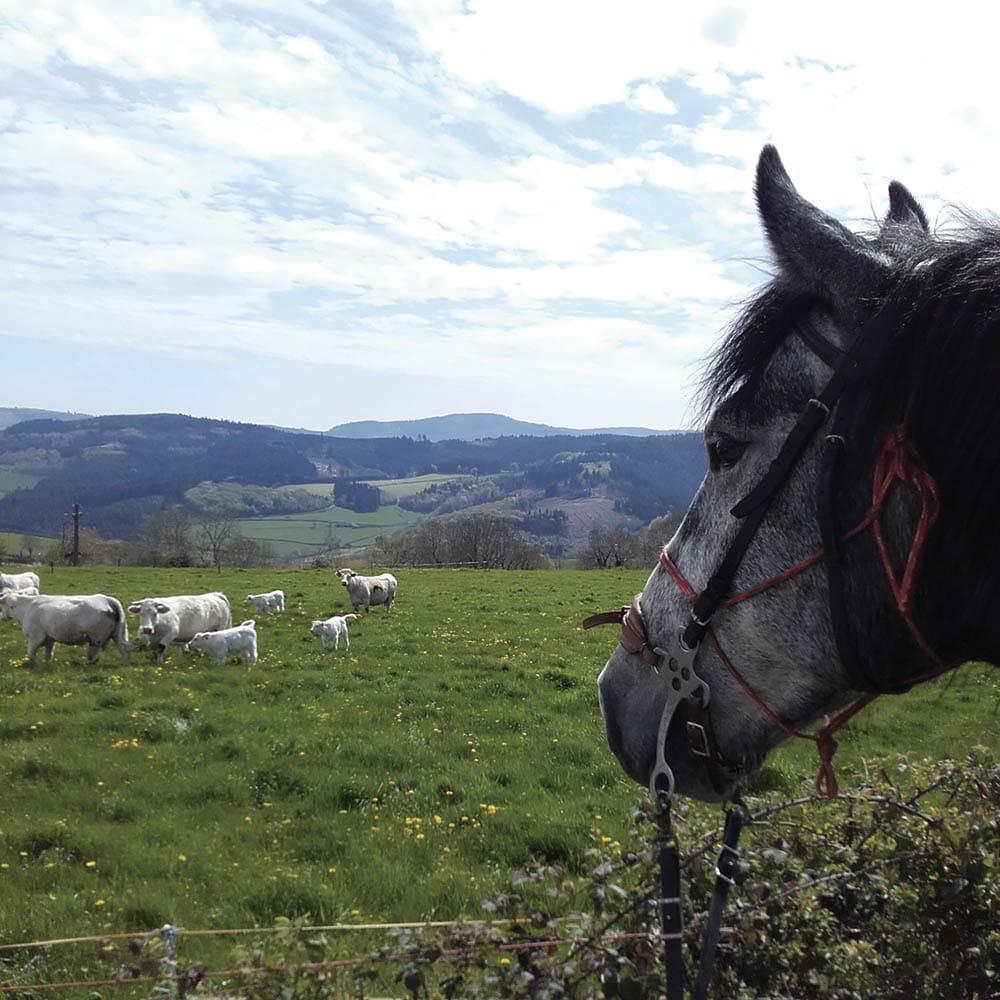 Propières, l'ouest du Beaujolais Vert à cheval