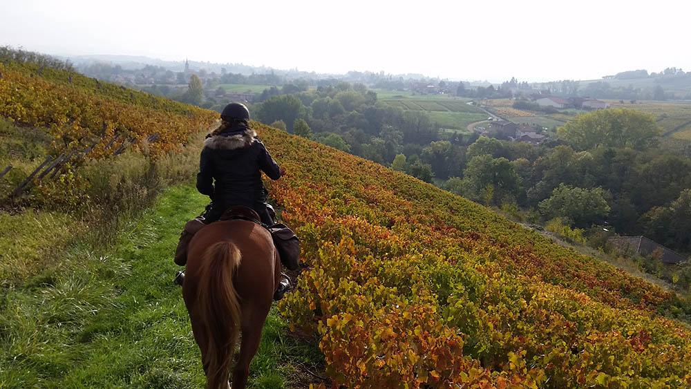 Randonnée à cheval Beaujolais circuit