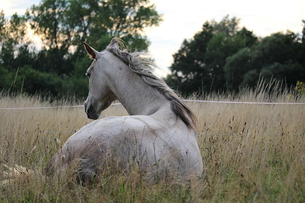 Caracolade circuit à cheval Haute Loire
