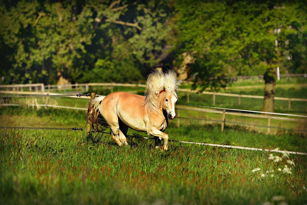 Monts du Lyonnais au pilat circuit cheval 4