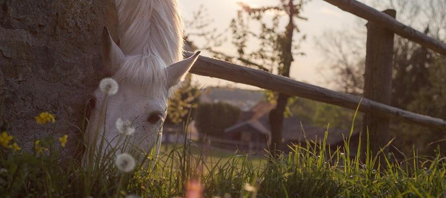 Chevaux au pre randonnee a cheval Cantal