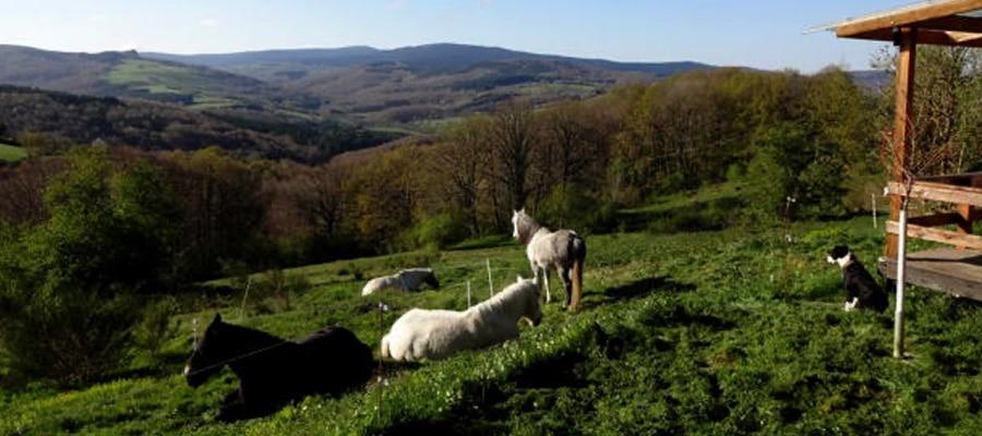 Naturavous randonnee cheval Allier