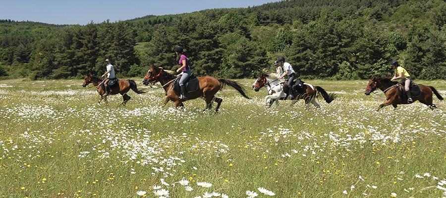 Circuit de la chaîne du Haut-Jura randonnee cheval Ain