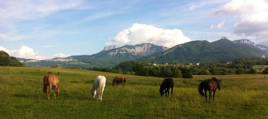 Poney-Club Les Crinières d'Ange randonnee cheval Savoie