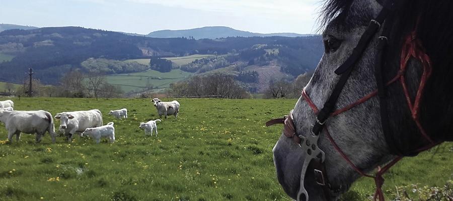 Propieres ouest du Beaujolais Vert circuit a cheval Rhone