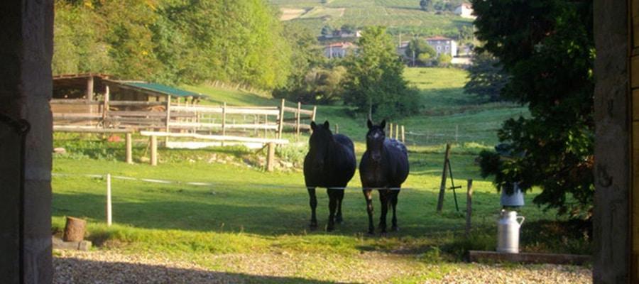 Relais d'étape le Chenil randonnee cheval Rhone