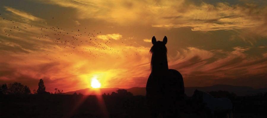 Coteaux du Revermont randonnee a cheval Ain