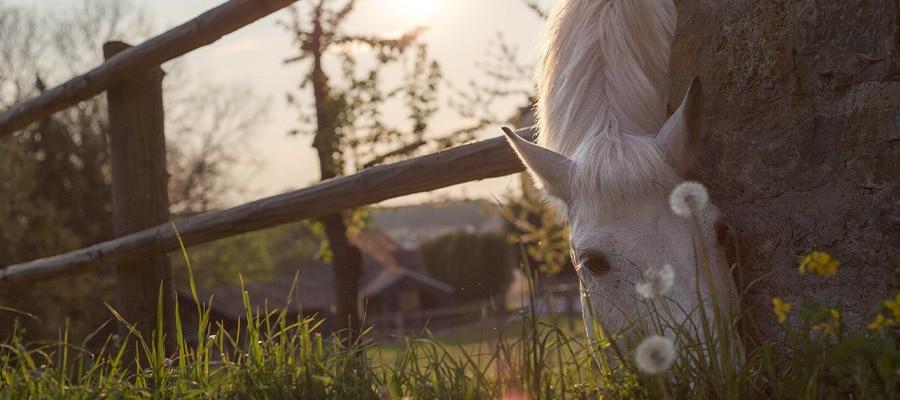 Les pattes bleues de la bresse randonnee cheval Ain
