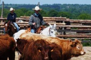 Country Pony Club